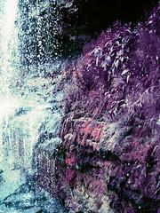 underkeila (inmno) Tags: lomochrome purple lomography aerochrome minolta ishootfilm