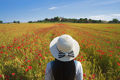 montalcino (Roberto.Trombetta) Tags: italy italia tuscany road path siena val dorcia orcia valley san quirico landscape paesaggio country campagna farmer panorama long black hair cypress cipresso hat cappello tourist turista sony 7rii zeiss carlzeiss sony7rii batis 25 woman girl amazing view beautiful wonderful stunning fineart fine art summer estate batis225 model fashion people 7rm2 allaperto montalcino clouds campo papaveri poppy flower wheat spike head field land toscana