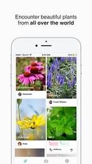 4 (picturethis_plants) Tags: picturethis app