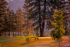 Morning exercise 晨練 (T.ye) Tags: landscape animal deer forest sunrise light green princeton bc canada 小鹿 鹿 動物 風景 森林