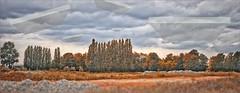 WE ARE NOT ALONE (bert • bakker) Tags: zeeburgereiland amsterdam thenetherlands ufos grass gras trees bomen clouds wolken strangeflyingobjectsunidentified vreemdevliegendevoorwerpen nikon50mm18g