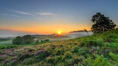 Burn Off (nicklucas2) Tags: newforest rockfordcommon tree sun sunrise mist heather bracken