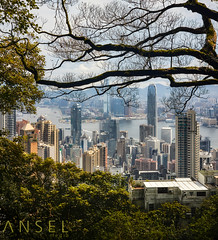 WanderNature (draken413o) Tags: hong kong architecture cityscapes skyline skyscrapers urban places scenes asia travel destinations victoria peak sigma 50mm vertorama morning trees framing nature wow canon 5dmk4 silhouettes