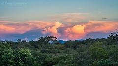 matinha do cauamé e serrinha do cantá (Thiago Orsi) Tags: amazon amazonia roraima afternoon ceu cloud crepusculo dusk fimdetarde floresta nuvens pordosol rio riocauame river sky sol sumauma sun sunset
