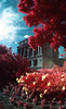 infrared-020 (Photo Taker #9) Tags: colorinfraredfilm infraredfilm colorinfrared aerochrome