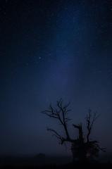 Eagle and the stars (k.tusnio) Tags: stars tree night landscape hdr nikon poland rogalin 35mm d5100