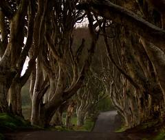 The Dark Hedges (Gavin Ferguson) Tags: trees coantrim northernireland game thrones