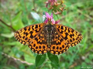 Butterfly 1390