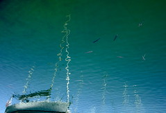 Flying Fish (andressolo) Tags: reflection reflections reflected reflect reflejos reflejo ripples sea ship ships boat boats barco fish swim swimming port docks dock animals distortions distortion distorted
