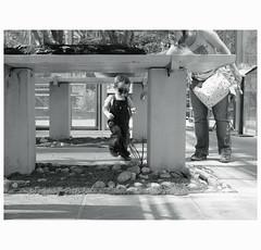 Off scale (michelle@c) Tags: springtime greenhouse garden bonsais collection little boy mother people arboretum daslebendesbonsaïs laviedesbonsaïs lavalléeauxloups valleyofaulnay chatenaymalabry monochrome 2017 michellecourteau
