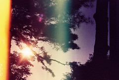 .a concentrated sense of life. (Camila Guerreiro) Tags: film crossprocessed expiredfilm lightleak fujichrome leica expired seoul southkorea analog camilaguerreiro crossprocess fuji leicar4 astia100