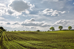 Green Fields (jamesromanl17) Tags: agriculture field landscape farm nature rural crop sky cloud flora countryside summer soil tree pasture season growth country cheshire england britain skies clouds cloudscape cloudy fields farming farmland canon eos