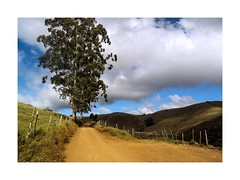 Dirt Road (W Gaspar) Tags: juizdefora minasgerais brazil brasil southamerica latinamerica rural outdoors nature road dirt morning fujifilm finepix x10 wgaspar photoborder