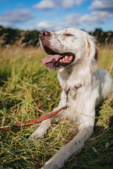 Just a day (or two) in the park (marco sees things) Tags: relax nature calmness arthur quiet bestfriend london chill holidayfeeling setter englishsetter dog park doglove weekendfeeling weekend hampsteadheath