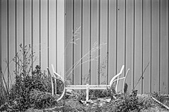 Table (robert schneider (rolopix)) Tags: bwfp 35mm apx25 agfa expiredfilm bw blackandwhite film instagram ifttt