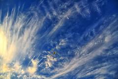 Up above the world so high!! (Masoodz) Tags: palmbeach nsw australia