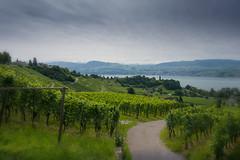 View over Lake Zurich (tomasz k) Tags: langzeitbelichtung weinfelder landscape vineyards männedorf zürich switzerland ch