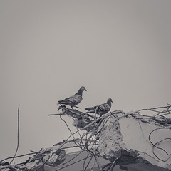 Demolition (room76com) Tags: germany cologne concrete destruction demolition building pigeons birds nature urban blackandwhite construction architecture city photography house monochrome koeln