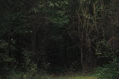 The dark Gate (Netsrak) Tags: eifel wald forest tree trees baum bäume green grün natur nature summer sommer