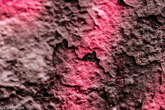 "Macro Mondays ""Texture"" (Charo R.) Tags: macro mondays texture macrofotografía canon"