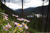 Fleabane Flower With a View (Eric Binns Photography) Tags: outdoors outside landscape colorado sky clouds flower wildflower strobist offcameraflash offcameralighting fleabane pink lake water lakegranby granby trees mountains