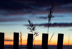 Lake Michigan Sunset Silhouette (matthewkaz) Tags: christmascove christmascovebeach northport leelanau lakemichigan lake water greatlakes clouds sky sunset fence sandfence dunegrass silhouette puremichigan summer leelanaucounty michigan 2017