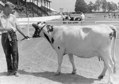 1103 (kentuckyffa) Tags: sae 55 ayrshire campbellsville dairy show meade county