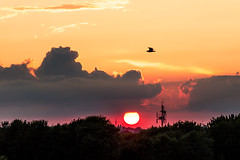 IMG_2937-1 (langdon10) Tags: bird canada canon70d montreal quebec seagull shoreline stlawrenceriver sun sunset clouds