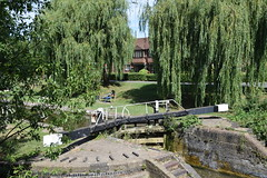 DSC_6954 Grand Union Canal Berkhamsted medium-sized historic market town on the western edge of Hertfordshire (photographer695) Tags: berkhamsted mediumsized historic market town western edge hertfordshire grand union canal
