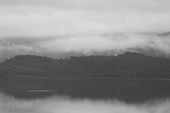 Misty Morning (Ged Slaughter Photography) Tags: misty morning hazy loch lochfyne minard gedslaughter scotland bw water waterscape cloud clouds trees treescape