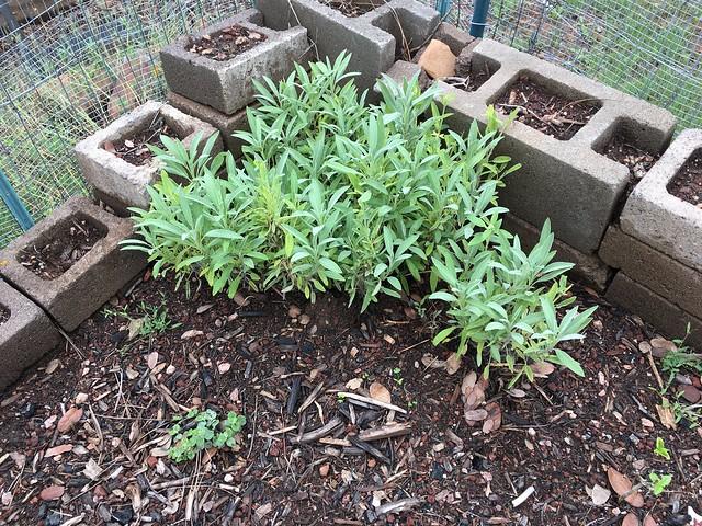 My One Garden Success
