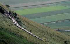 Downhill (porrounum) Tags: castelluccio castellucciodinorcia gregge