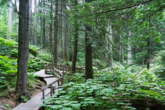 Giant Cedars Boardwalk (raruler) Tags: boardwalk cedar britishcolumbia columbiashuswapb canada ca