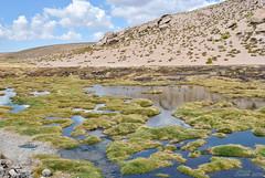 Bofedal (Javiera C) Tags: arica parinacota putre lauca laucanationalpark parquenacionallauca parquenacional nationalpark naturaleza nature altiplano highlands paisaje landscape bofedal humedal wetland agua water altura heights