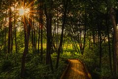 Follow the Sun (Cederquist Christoffer) Tags: loveinstagoodphotoofthedaybeautifulhappyfollowmepicofthedaysummerartnaturetravellifebeautyinstagramflickrdreamworldimagesresourcemagphotocanonphotographyautohashwoodnaturesuntreeleafdawnlandscapel sunstar inexplore explored
