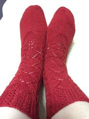image (torochan2012) Tags: 2017 socks