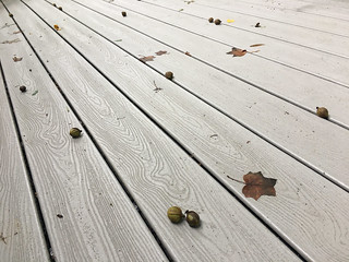 Hickory Nuts on the Deck