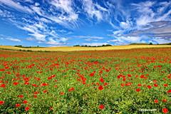 Landschaftsbild (garzer06) Tags: himmel wolken blau mönchgut deutschland rot grün landschaft mohnblumen landschaftsbild naturphoto landschaftsfoto naturfoto vorpommernrügen naturphotography mecklenburgvorpommern inselrügen vorpommern naturfotografie landscapephotography insel berge rügen landschaftsfotografie gager groszicker wolkenhimmel