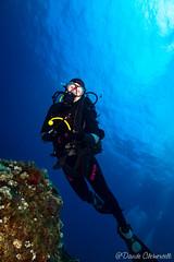 IMG_6014 (davide.clementelli) Tags: scuba underwater underwaterlife diving dive immersione portofino colori colors colore color fishes fish pesci