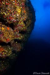 IMG_5979 (davide.clementelli) Tags: scuba underwater underwaterlife diving dive immersione portofino colori colors colore color fishes fish pesci