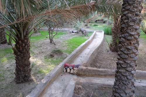 Irrigation Ditch in the Al Ain Oasis