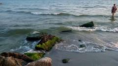 Black sea and stones in algae (avvinsk) Tags: black sea stones algae august 1 2017 0400pm avvi ko