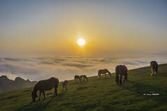Una mañana de estas en Gorbea (Jabi Artaraz) Tags: jabiartaraz jartaraz zb euskoflickr gorbea potros horses caballos yeguas amanecer bruma behelainoa paz serenidad tranquilidad