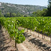 """2017_07_15-29_Mazan_Provence-98 • <a style=""""font-size:0.8em;"""" href=""""http://www.flickr.com/photos/100070713@N08/36248398806/"""" target=""""_blank"""">View on Flickr</a>"""