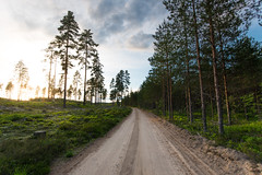 Gravel road - Brattfors (- David Olsson -) Tags: värmland sweden brattfors road gravelroad grusväg landscape sunset sundown evening late summer sommar kalhygge forest wooods trees nikon d800 1635 1635mm 1635vr vr fx davidolsson leefilters 06hard gnd grad