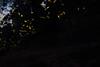 Luciernagas 2017 (Divad ♫) Tags: luciernagas tlaxcala nanacamilpa santuario méxico naturaleza luces noche