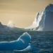 Congelando el aliento del mar