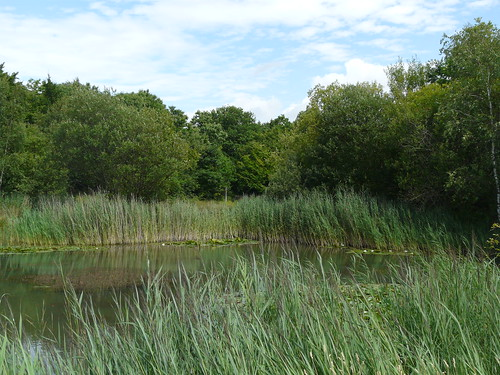 Shorne Woods Country Park