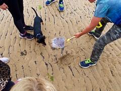 EM10 2017 07 15 (Sibokk) Tags: beasts camera digital dog em10 harry jellyfish olympus photography scotland uk crail2017 fife elie