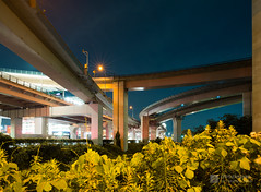 With flowers, Nagoya Minami Junction (名古屋南ジャンクション) (christinayan01) Tags: elevated expressways highway junctio jct junction road bridge japan nagoya architecture overpass